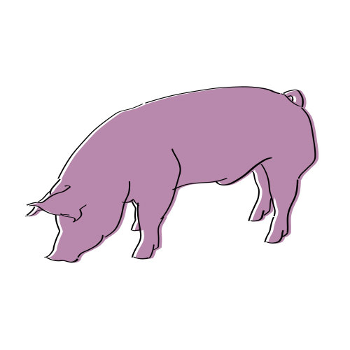 Pink color pig icon