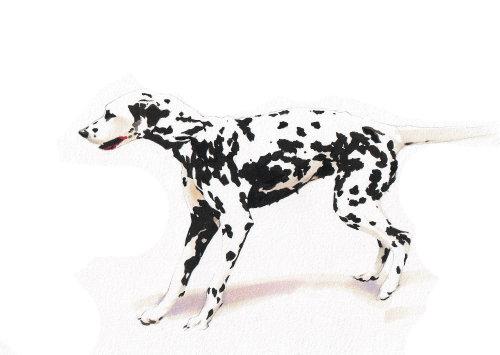 Ilustración Dalmatiner