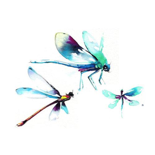 Illustration aquarelle d'insectes à ailes nettes