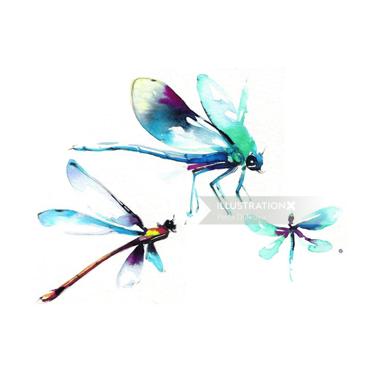 Watercolor illustration of Net-winged insects
