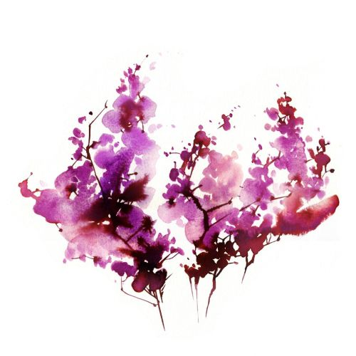 loose nature pink flowers illustration