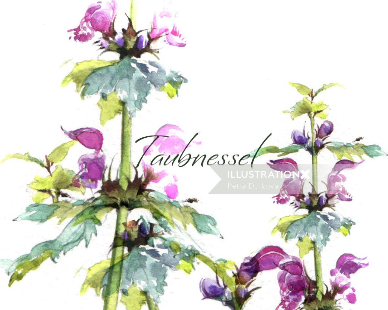 Rosa glauca Plants watercolor illustration