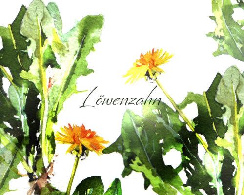 Illustration aquarelle de plantes de pissenlit