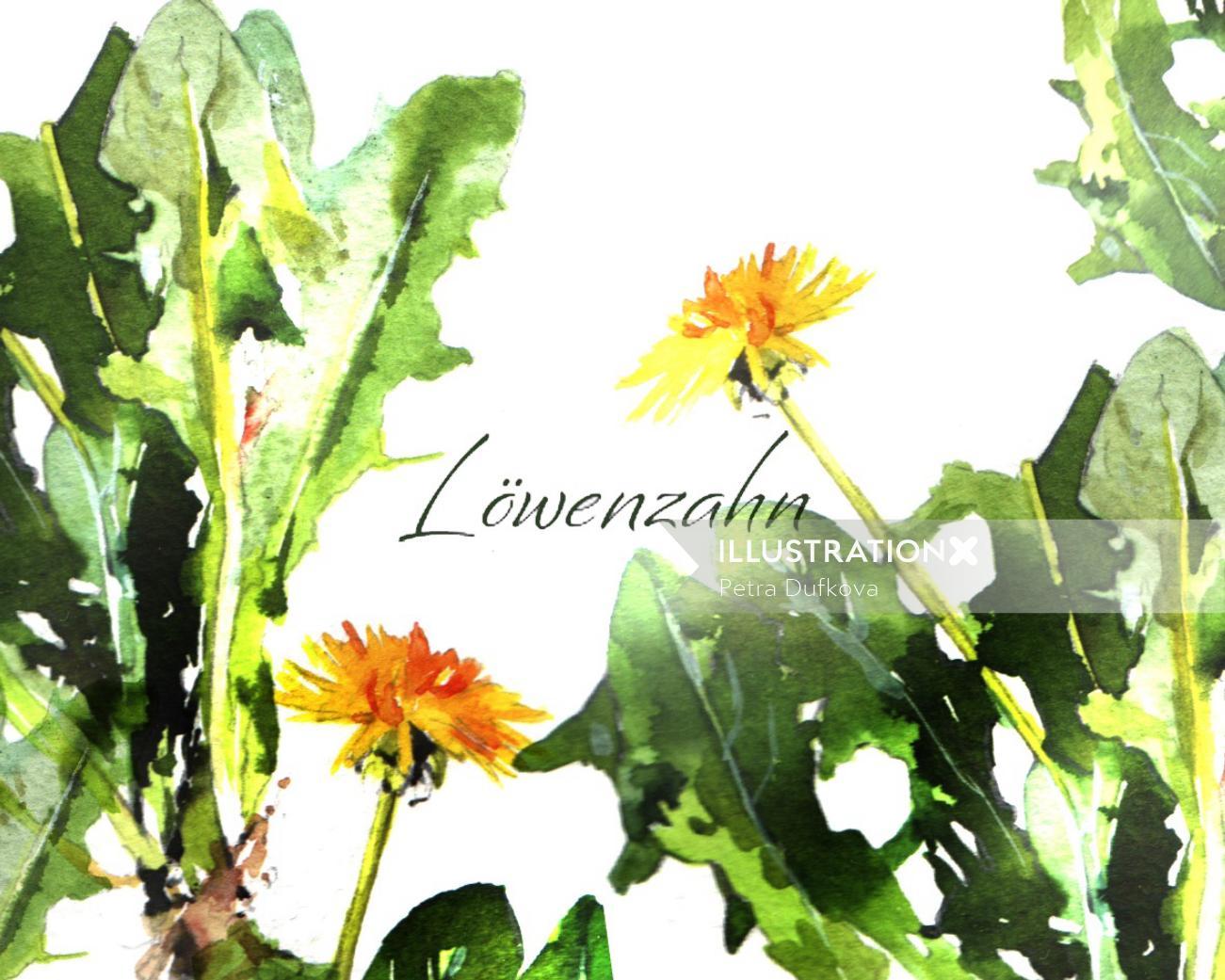 Dandelion Plants watercolor illustration