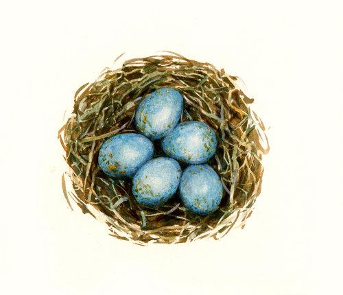 illustration of Bird Eggs in Nest