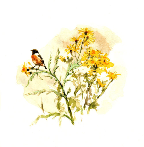 Watercolor Sparrow sitting on flower's branch