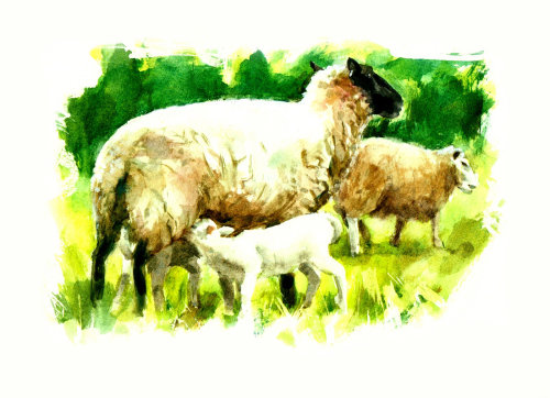 beautiful painting of sheep with kids