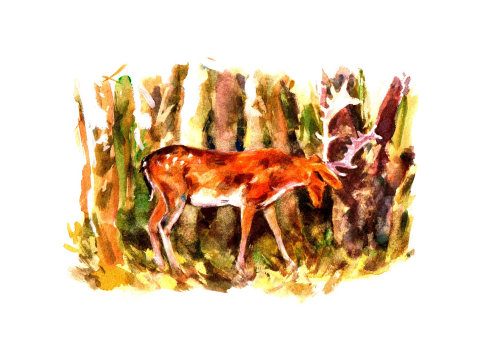Deer Painting by Philip Bannister