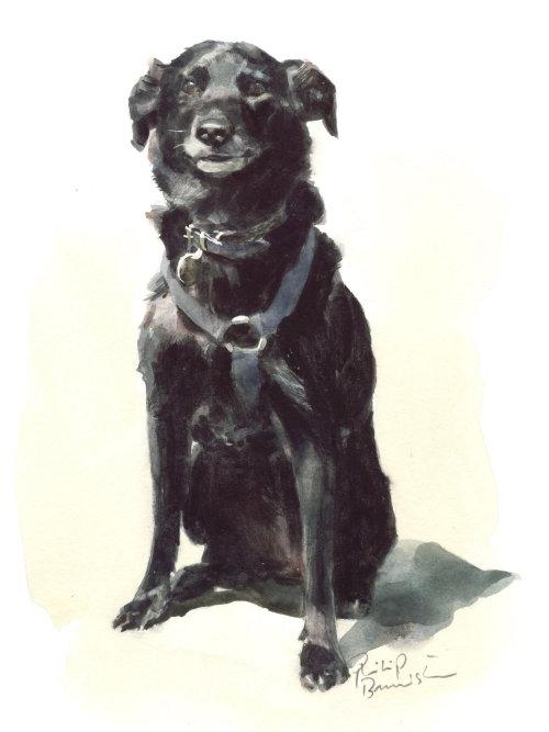 Black dog illustration by Philip Bannister