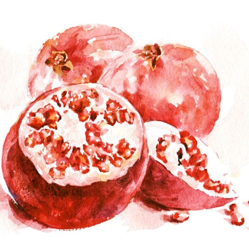 Water colour artwork of Pomegranates