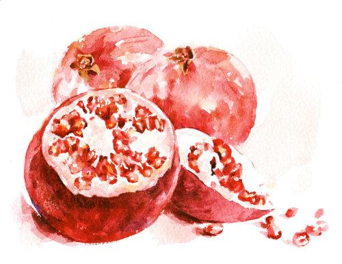 Water colour artwork of Pomegranates