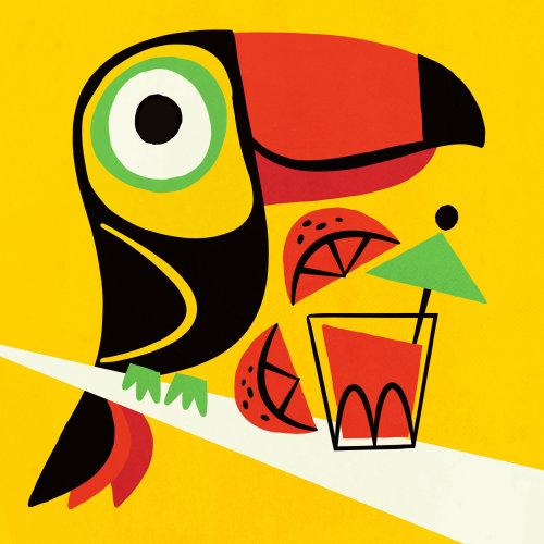 Piciform bird illustration