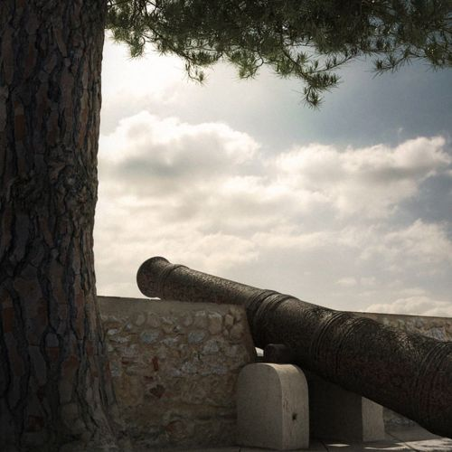 Canon under tree