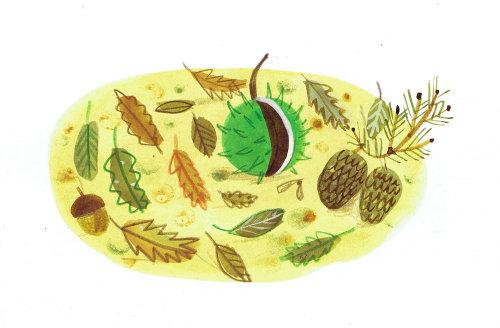 fruits épineux et feuilles séchées dessin
