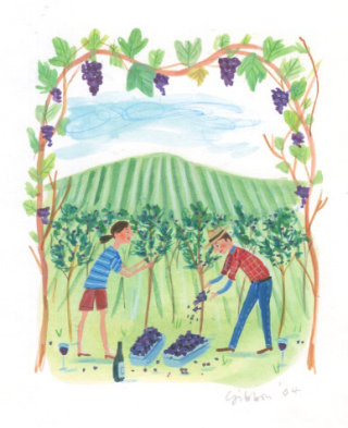 lads collecting grapes for wine