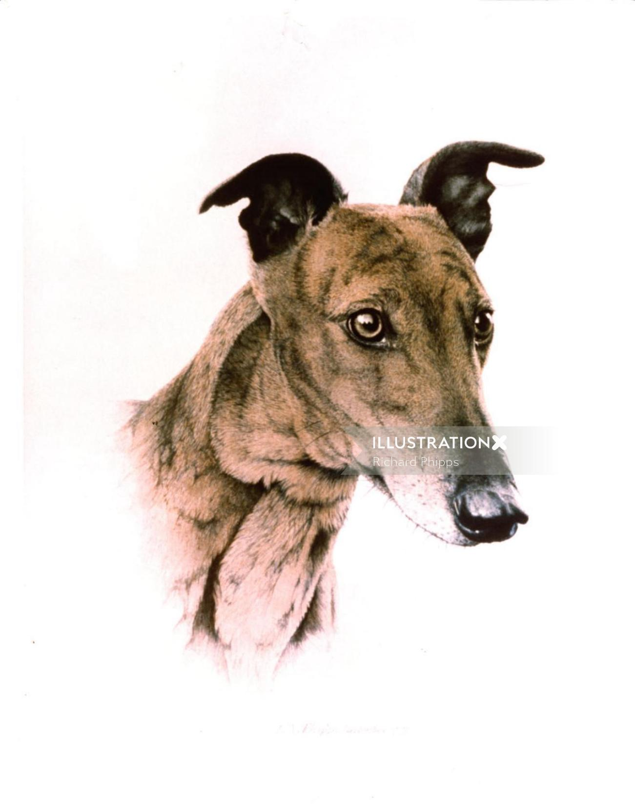 Dog Graphic Illustration