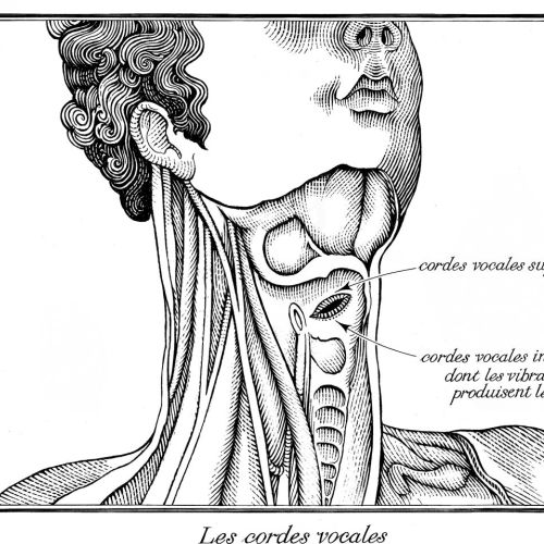 Neck and throat illustration by Richard Phipps