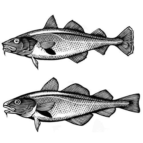 Conception graphique d'emballage de poisson