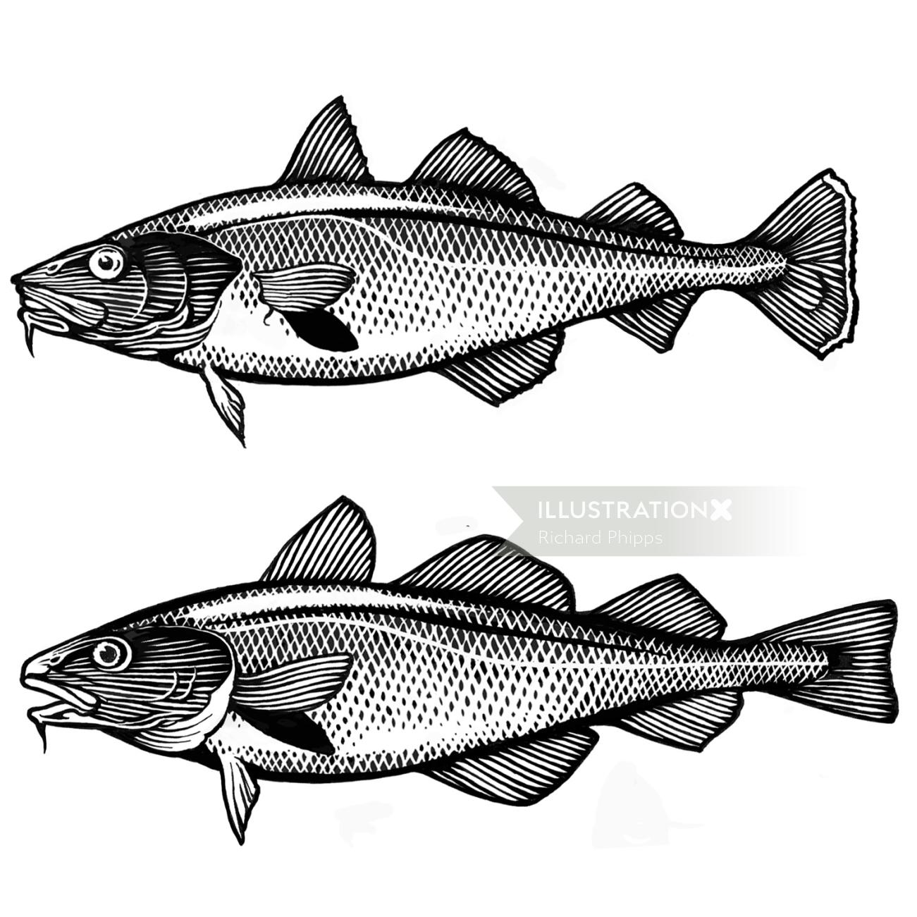Fish packaging graphic design