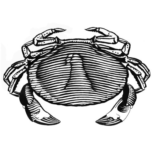 line art of crab