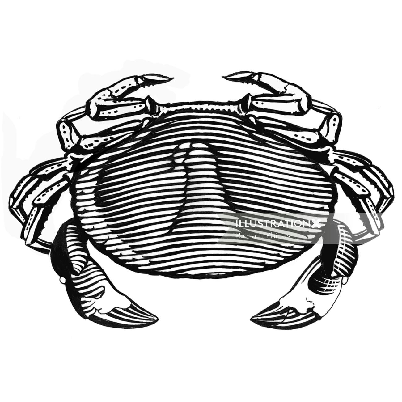 line art of crab for Sainsbury's