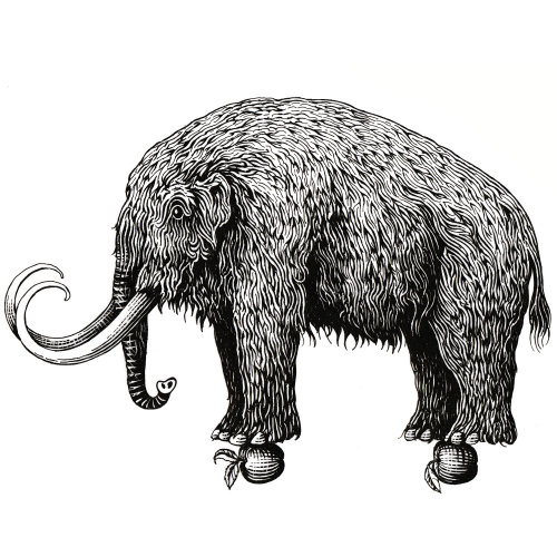 Mammoth Black and white Graphic