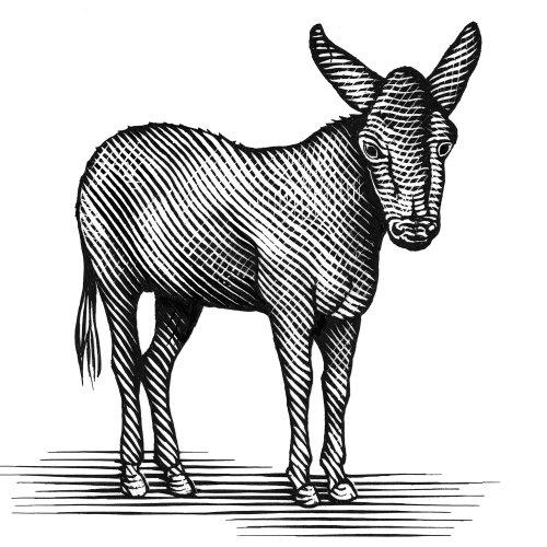 Donkey on wine bottle
