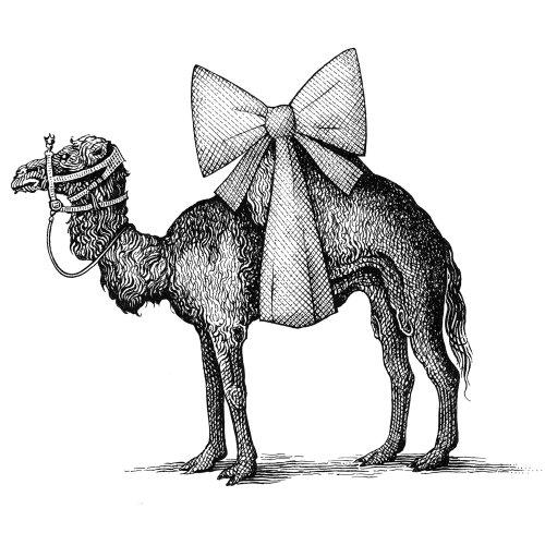 Mariage Dos et donts chameau