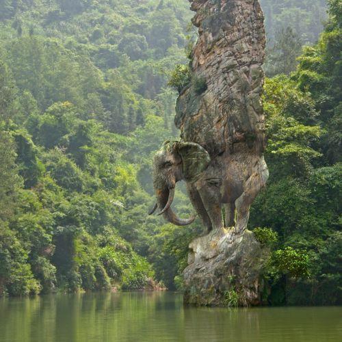 RIVE GAUCHE 动物与自然