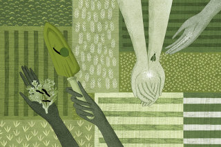 allotment, gardening, growing, slug, snail, gardener