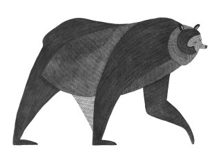 bear, bears, animal