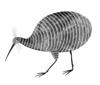 Kiwi bird drawing by Rosanna Tasker