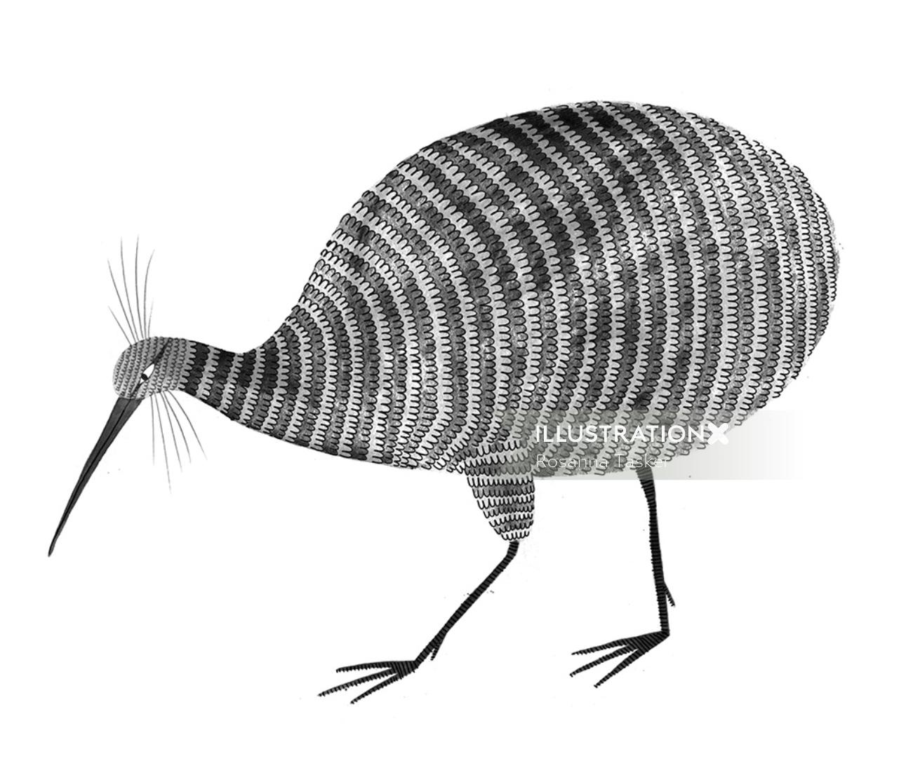 Kiwi bird drawing by Rosanna Tasker