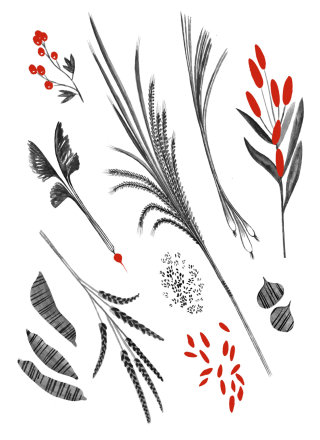 Botanical art by Rosanna Tasker