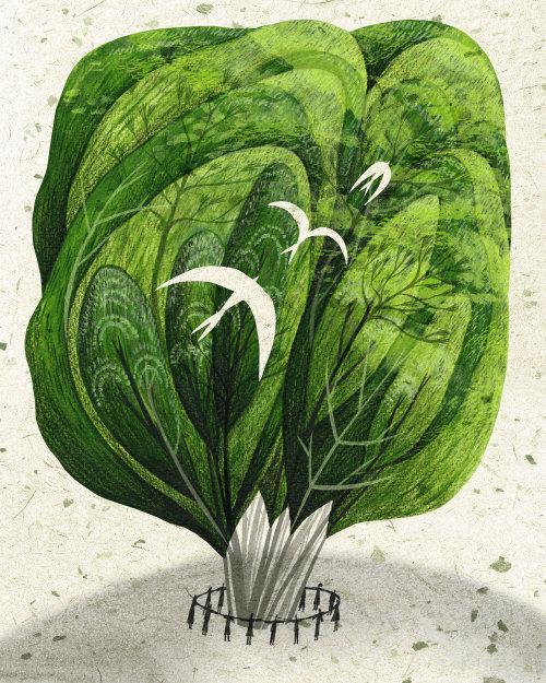 Protecting forest plants illustration by Rosanna Tasker
