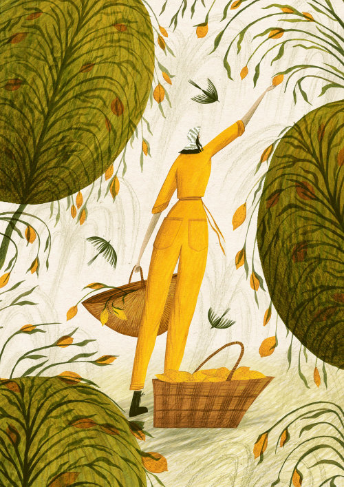 Woman picking lemons from the tree