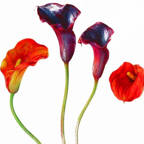 Purple and Red flowers illustration by Rosie Sanders