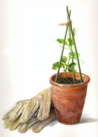 Flower pot illustration by Rosie Sanders