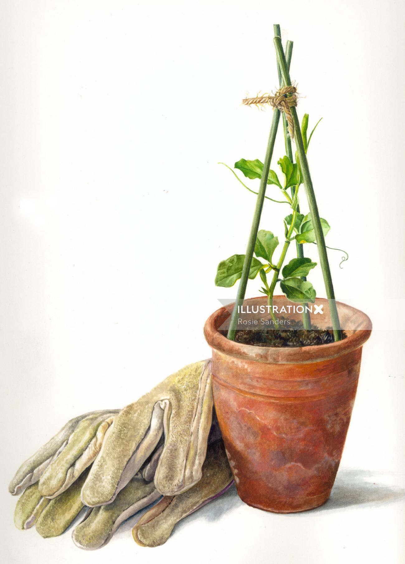 Flower pot illustration by Rosie Sanders