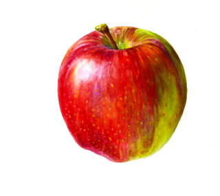 Apple illustration by Rosie Sanders