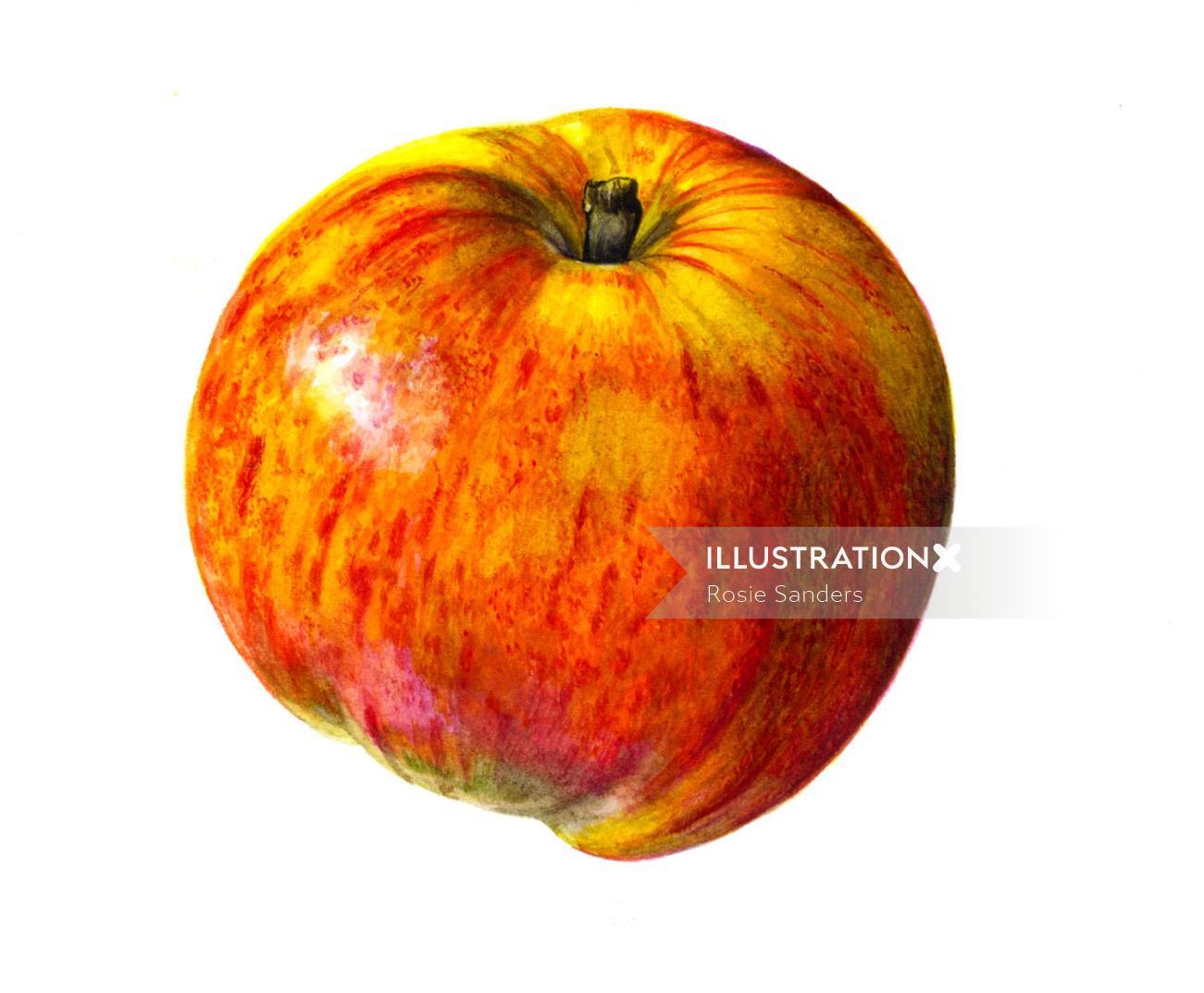 Apple illustration by Rosie Sanders