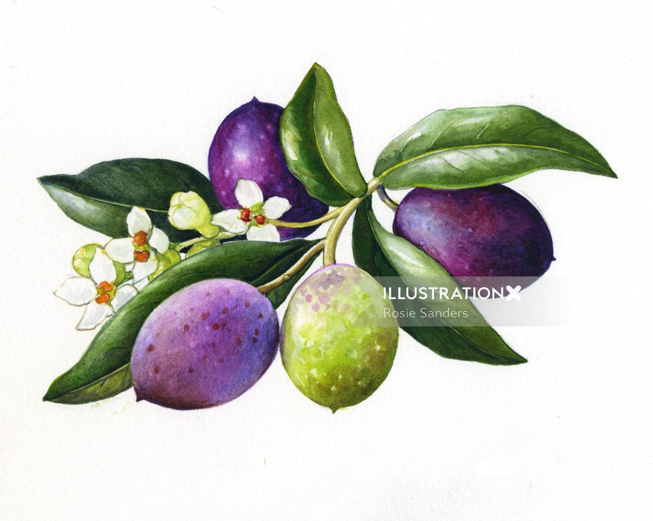 Fruit illustration by Rosie Sanders