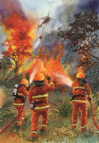 Firefighters extinguish a forest fire poster