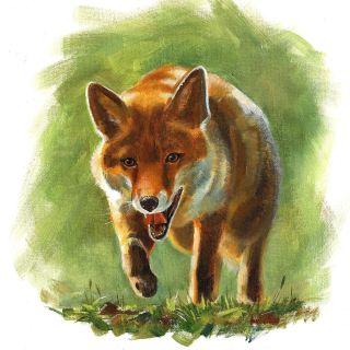 Ruth Palmer Animals