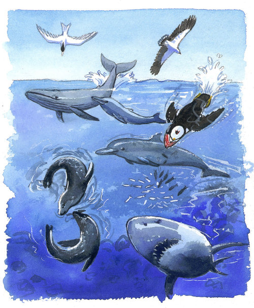 Graphic art of Sea Fauna
