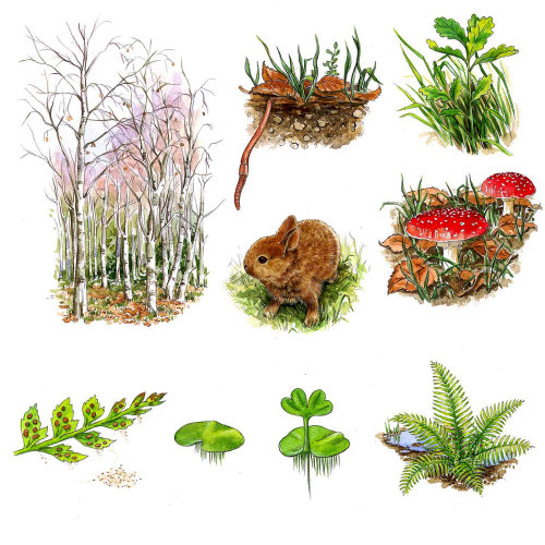 Pictograph of plants