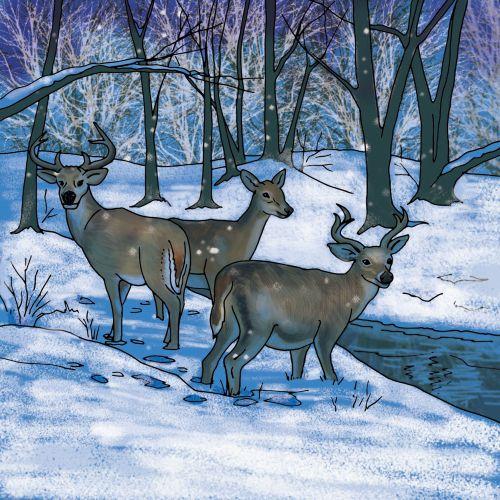 Ruth Palmer 动物与自然