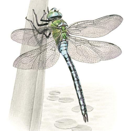 Sabrina Luoni Nature Illustrator from Italy