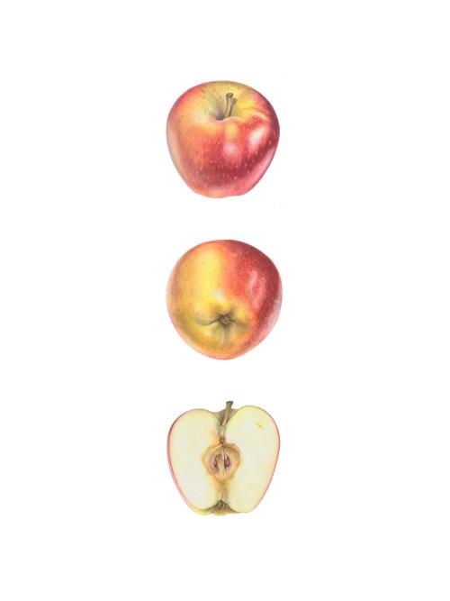 Pomme 'Ambrosia' (Malus domestica 'Ambrosia')
