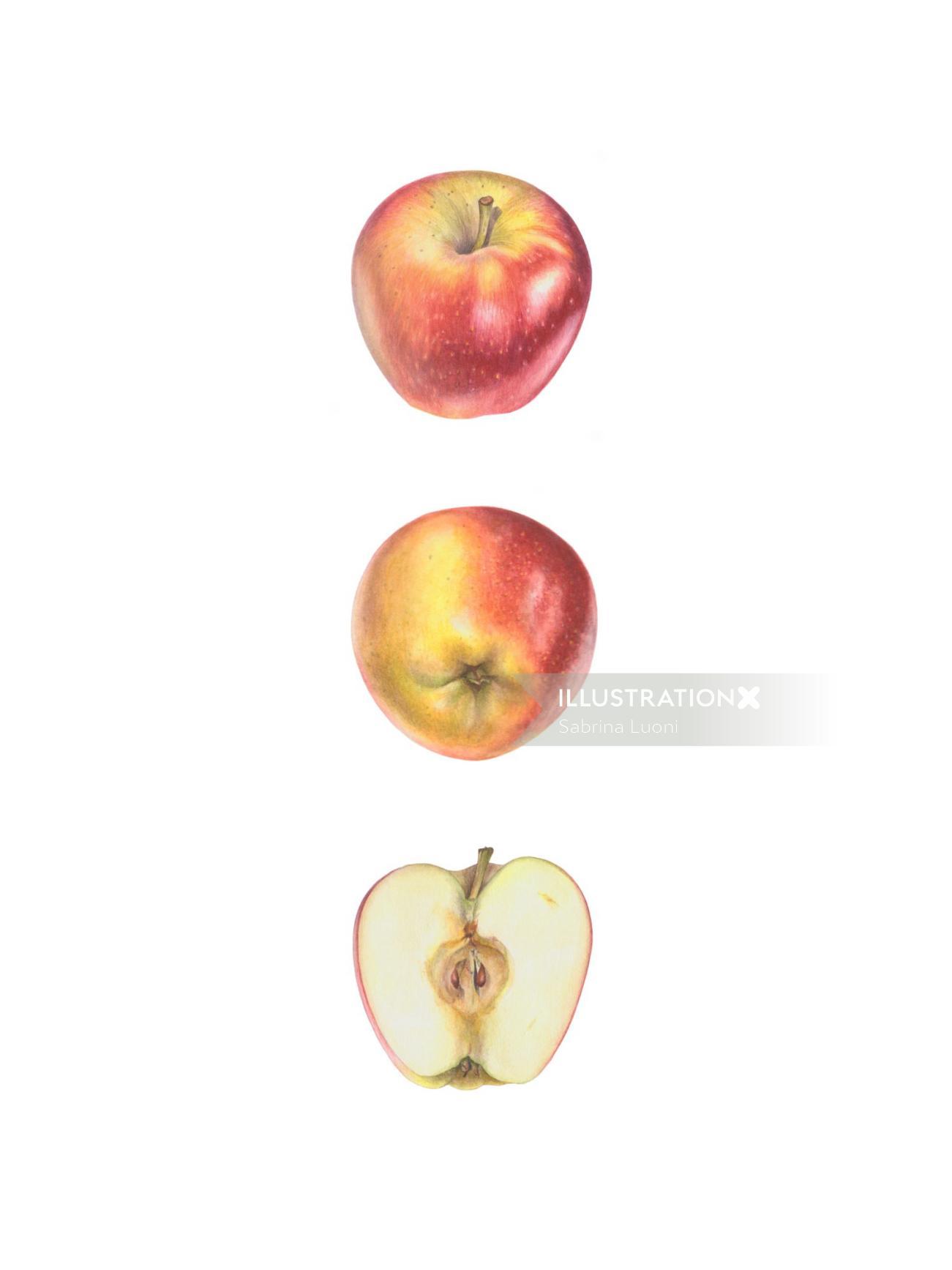 'Ambrosia' Apple (Malus domestica 'Ambrosia')